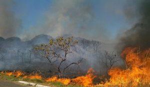 Brasil: «El Cerrado se prende fuego lejos de la mirada de los medios»