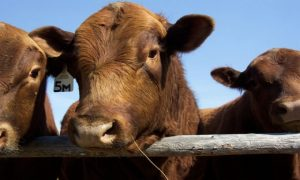 Wissenschaftlich fragwürdig: Autorengruppe empfiehlt Fortsetzung des Fleischkonsums