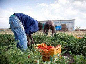 Agricoltura, in Italia è emergenza sicurezza. L'iniziativa di USB per la Giornata Mondiale dell'Alimentazione: cibo sano, lavoro sano