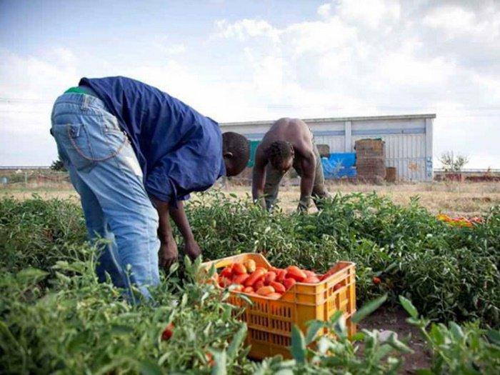 Siamo finalmente ad una svolta in tema di regolarizzazione dei migranti irregolari?