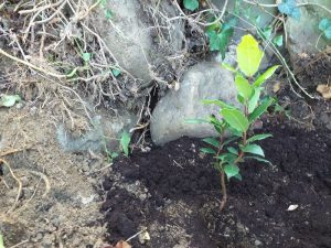 Un albero per Alberto