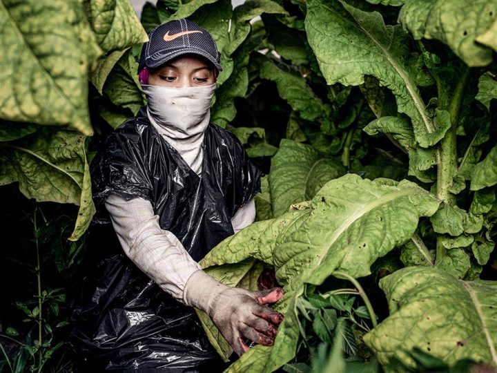 Children Working in Terrifying Conditions in US Agriculture
