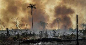 Solidarietà al movimento ambientalista brasiliano e alla ONG sotto attacco da parte del governo