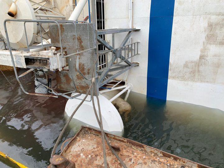 Sinking sheep transport ship ROM 2019