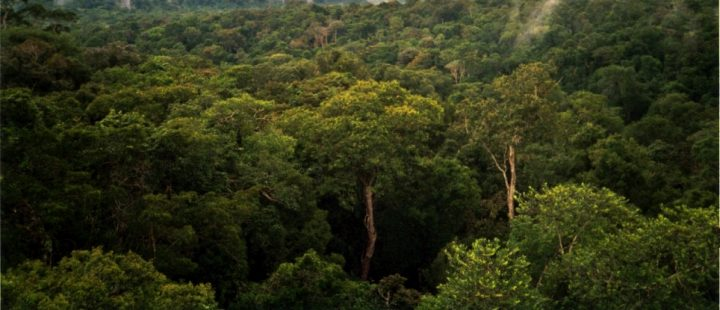 The Amazon at a Tipping Point