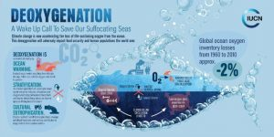 New Report on Ocean Oxygen Loss Gives 'Ultimate Wake-Up Call' to Act on Climate
