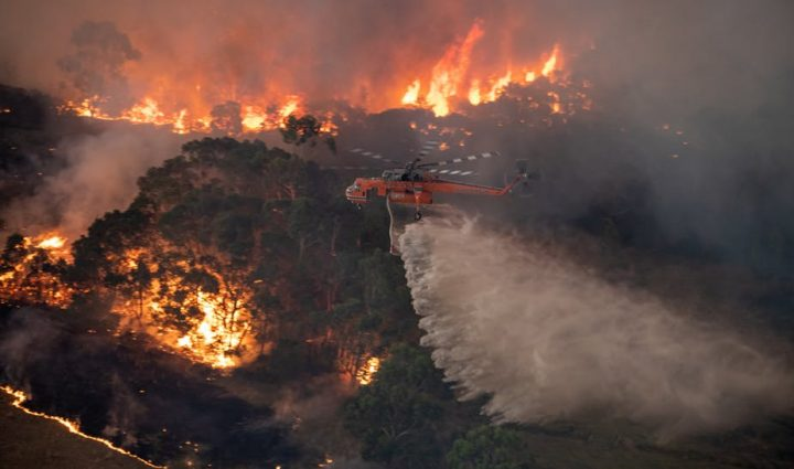 More Than One Billion Animals Killed in Australia Wildfires Called a 'Very Conservative' Estimate