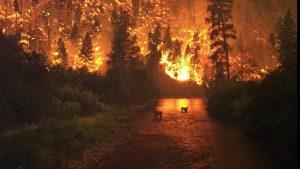 Le dérèglement climatique enflamme l'Australie