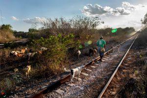 México: comunidades de Calakmul ganan amparo contra Tren Maya