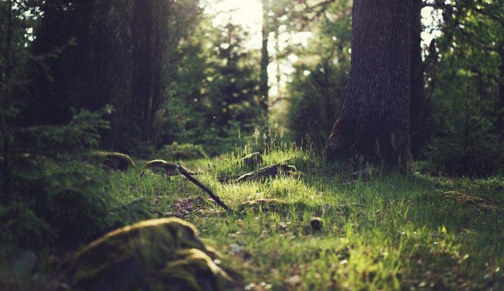 Il bosco di pioppi nella Terra dei Fuochi: una storia d'impegno, amore e bellezza