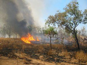 L'Australia brucia: e noi?