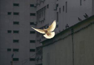 Bugün Barış Çağrısı Daha da Önemli
