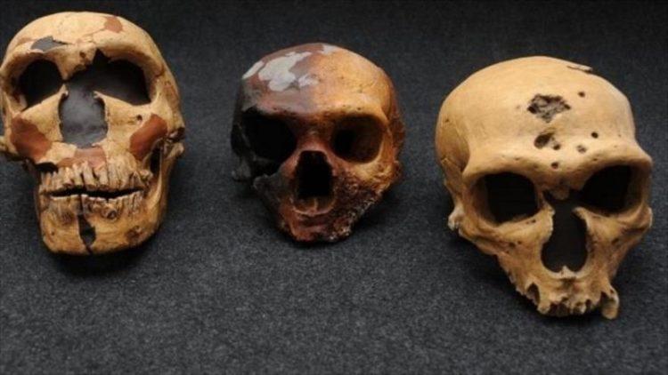 Les gènes d'un peuple « fantôme » découverts dans l'ADN humain moderne