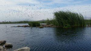 Día Mundial de los Humedales: conoce los sitios Ramsar del Perú