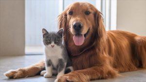 OMS: Las mascotas no transmiten el coronavirus a los humanos