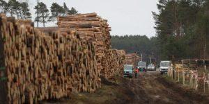 Elektrikli araç için ağaç katliamı