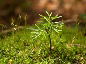 Wald im Wandel – Österreich pflanzt 1,8 Millionen neue Bäume