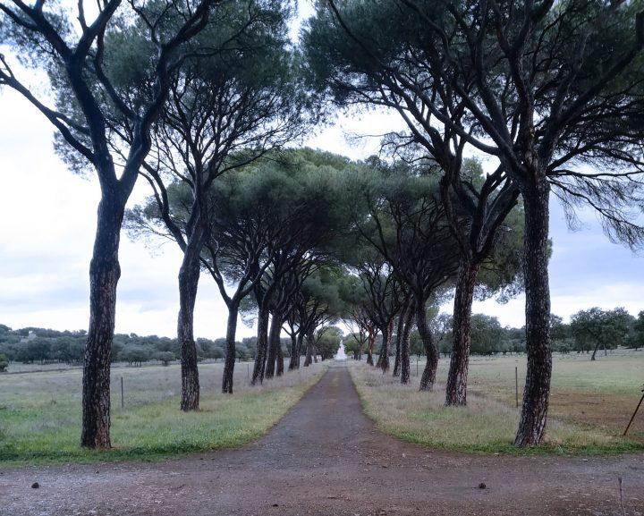 Carta desde el confinamiento… en un lugar de La Mancha