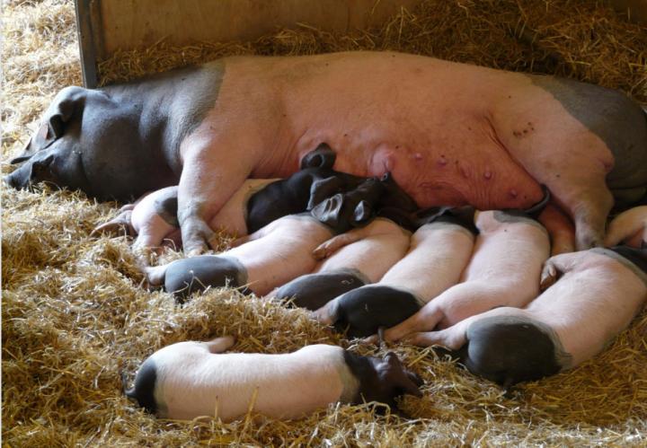 Bundesratsverschiebung Kastenstand: Wir brauchen eine Tierschutzwende!