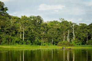La pandemia nos enseña que debemos respetar los bosques y su biodiversidad