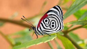 Yaşadığın sürece sen bir kelebeksin