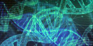 Nuevos transgénicos, más riesgos