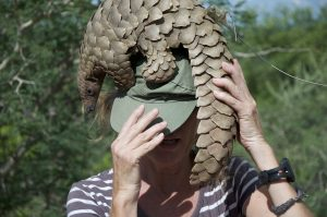 Is The Gentle Pangolin a Link in the Covid 19 Virus?