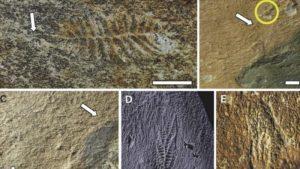 Primeras redes sociales ya existirían hace 500 millones de años