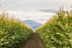 Πρωτοβουλία για την αξιοποίηση μη καλλιεργήσιμων εκτάσεων με τη βοήθεια του δήμου Διστόμου Αράχωβας Αντίκυρας
