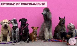 Historia de confinamiento / 13