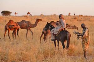 El hambre amenaza a 17 millones de personas en el Sahel