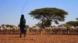 COVID-19: le conseguenze del virus sui pastori nomadi del Senegal