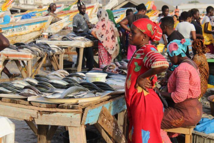 Senegal: il mercato del pesce di Soumbedioune