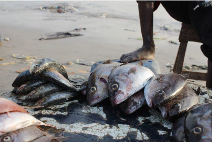 Soumbedioune-pesce20