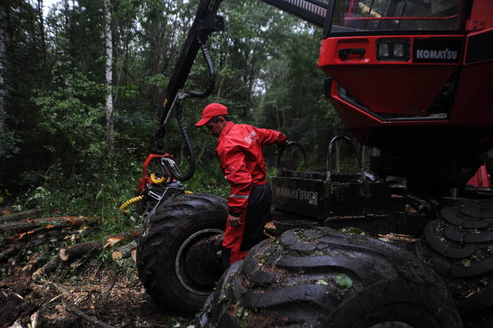 Forestry industry must improve safety record