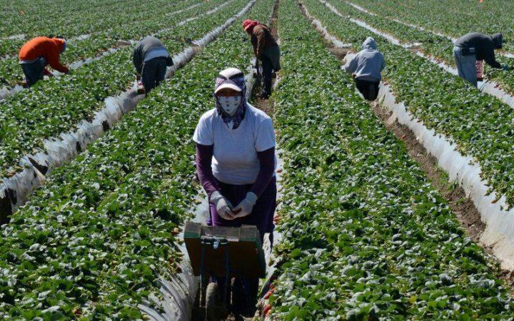 Lavoro coatto generalizzato in cambio di sostegno al reddito