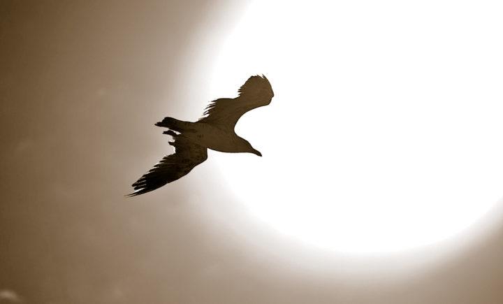 El vuelo del hechicero