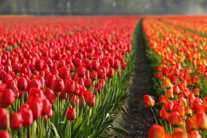 Manifiesto por unos Países Bajos más justos y sostenibles