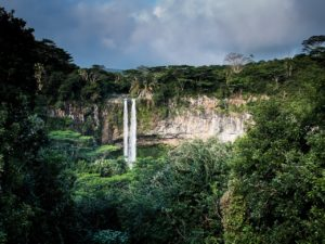 Waldrodungen erhöhen das Risiko für Pandemien