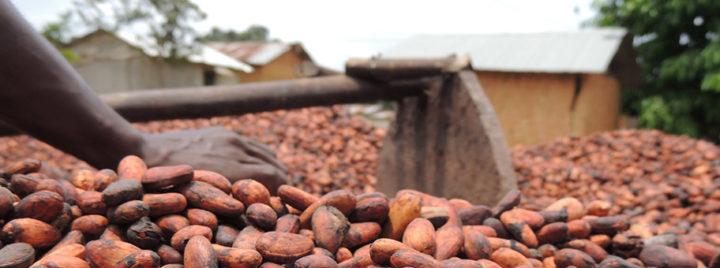 Kinderarbeit auf Kakaoplantagen