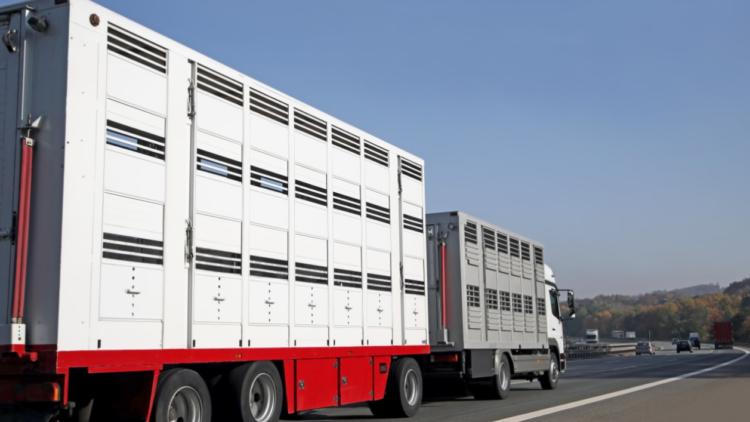 Die Niederlande stoppen Tiertransporte nach Russland – Deutschland muss sofort nachziehen