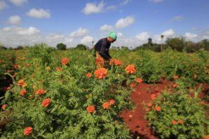 Alianza de cooperativas mejora la respuesta del agro cubano