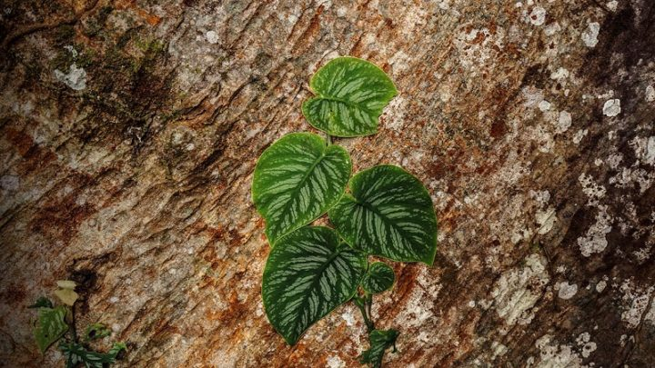 Si la reactivación forestal implica afectar la vida… no hemos aprendido