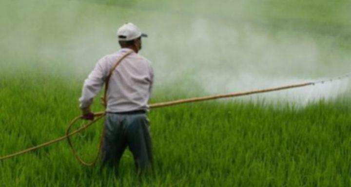 Schweiz: Verbotenes Gift auf den Tellern
