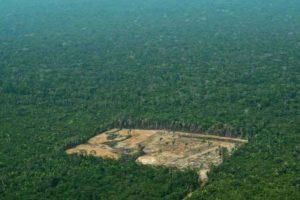 Deforestación de la Amazonia brasileña creció 12 por ciento en mayo