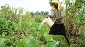Derechos de la mujer a la tierra siguen plagados de obstáculos en Kenia