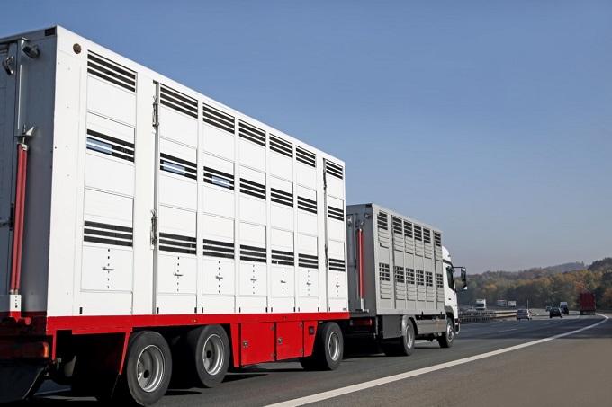 Auch Österreich verbietet Lebendtierexporte nach Russland – wann reagiert Deutschland?