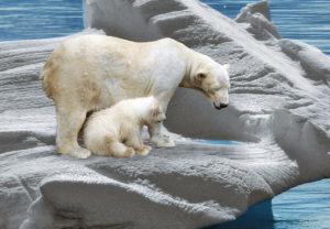 """OMM: degelos na Sibéria e incêndios no Ártico """"clamam por ação climática urgente"""""""