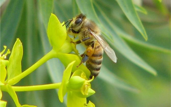 Apicoltura, fondamentale per la biodiversità e lo sviluppo delle produzioni agricole