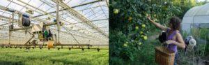 Cambio de paradigma: Permacultura versus AgTech